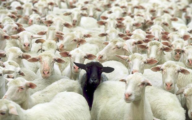 Ko ovce obmolknejo